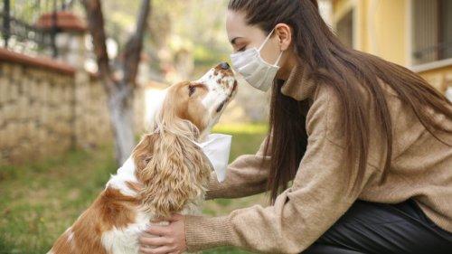 So infiziert sich Ihr Haustier mit dem Coronavirus