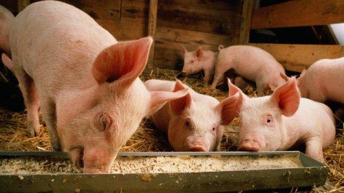 Auch Wirbeltiere haben Gefühle: Neues Tierschutzgesetz in Großbritannien