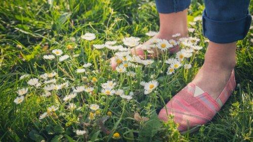 5 Wildkräuter zum Entgiften, die Sie auf jedem Spaziergang finden