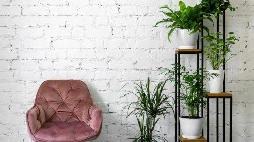 Pflanzenaufbewahrung: So setzten Sie Ihre Gewächse gekonnt in Szene!
