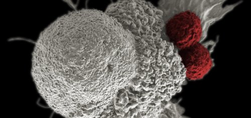 Blackstone to invest $250M in cell therapy startup backed by Intellia, Cellex