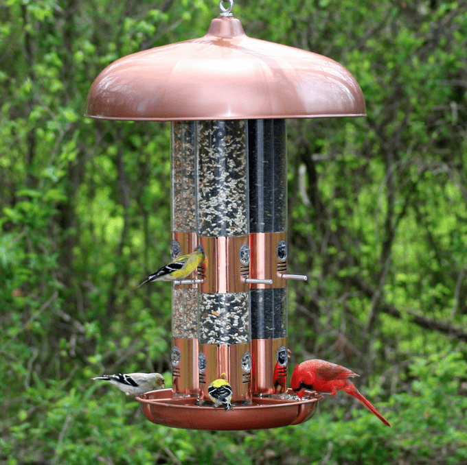 The Best Cardinal Bird Feeders and Birdseed