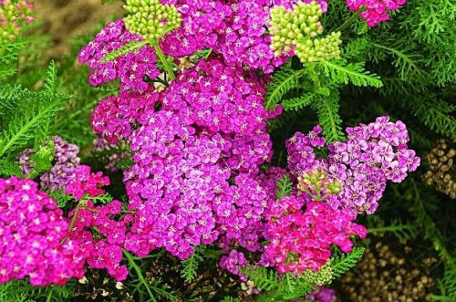 Top 10 Plants You Can't Kill