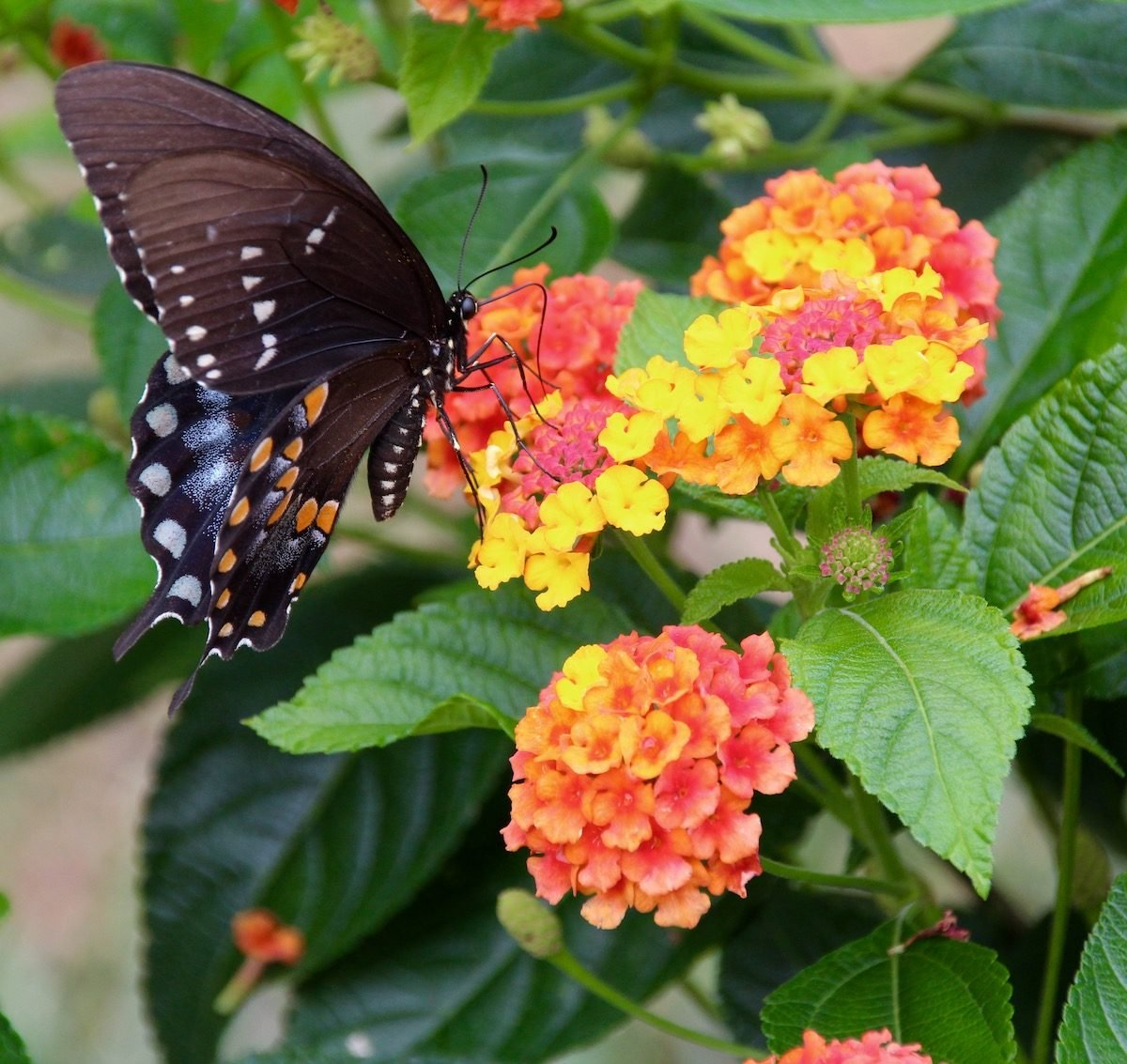 Late-Blooming Fall Flowers That Attract Butterflies