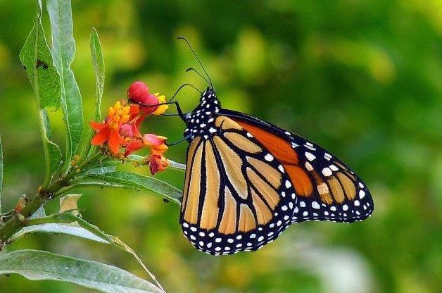Fall Butterfly Garden Tips