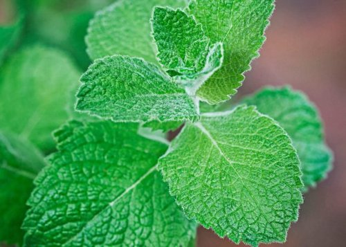 Top 10 Herbs to Grow for Cooking