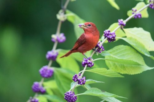 How to Attract Birds to Your Yard: Food, Water and Shelter