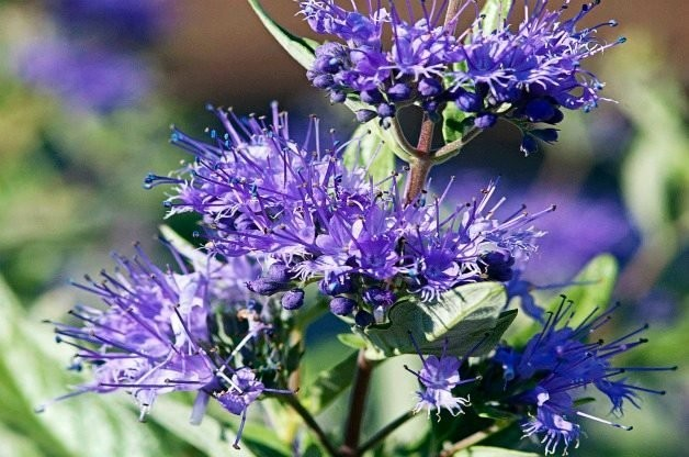 Top 10 Small Shrubs for Small Spaces