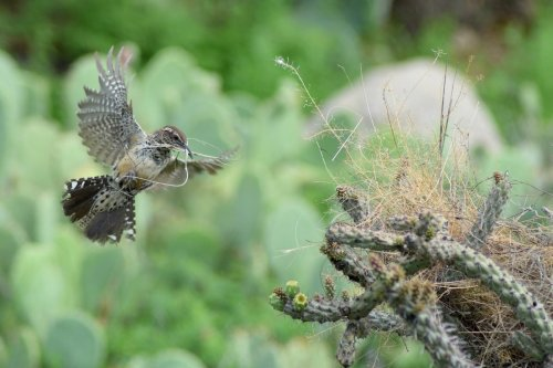 This is the Only Bird Nesting Material You Should Put Out