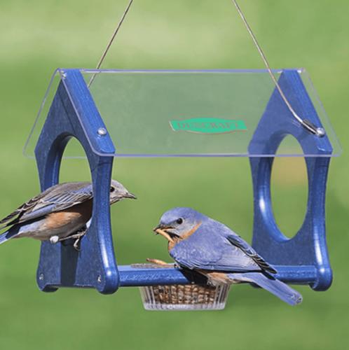 The Best Bluebird Feeders and Feeding Tips