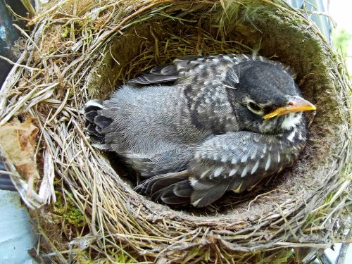 What to Do If You Find an Abandoned Bird Nest or Baby Bird
