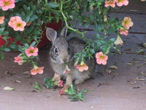 Expert Garden Advice on Rabbit Resistant Flowers