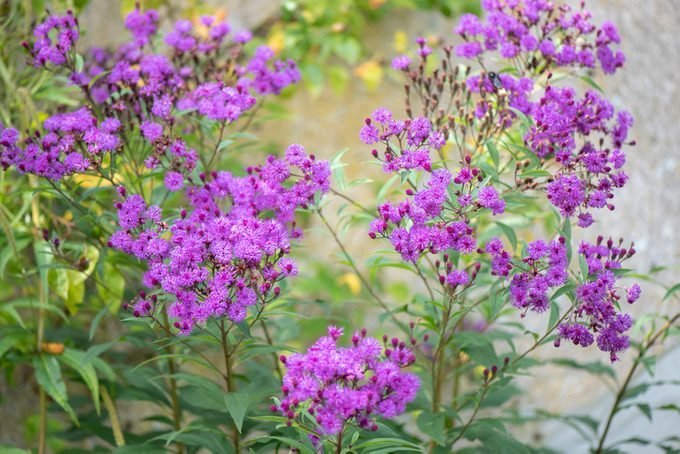 Late Summer and Fall Flowers That Attract Hummingbirds