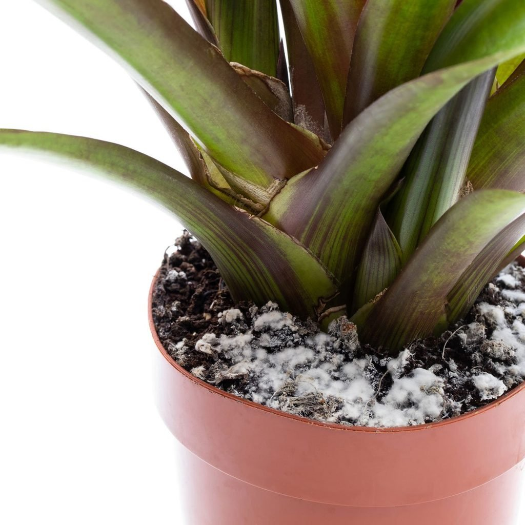 Why Is There Mold on My Houseplant Soil and How Do I Fix It?