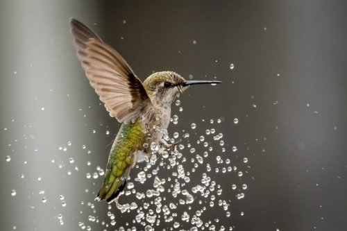 Water, Bugs and Spiderwebs: More Ways to Attract Hummingbirds