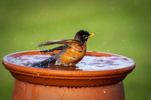 How to Repair a Cracked Birdbath