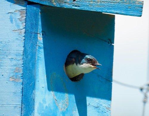 Birding Guidelines: Birdhouse Hole Size Chart