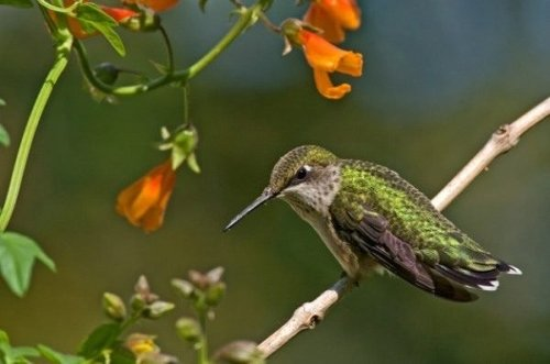 Hummingbird Photography Secrets