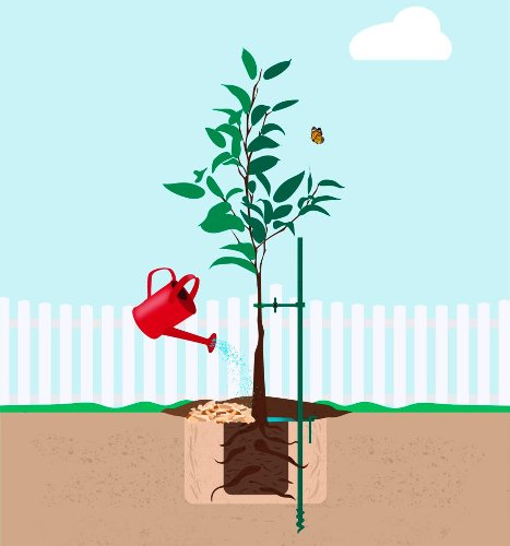 6 Essential Steps for Tree Planting Success