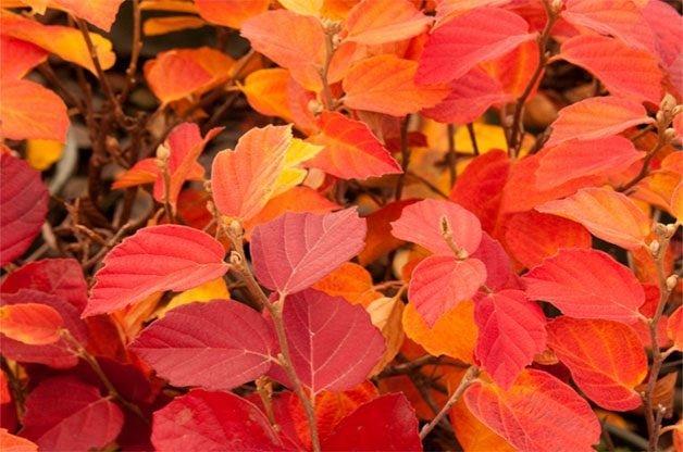 9 Best Fall Shrubs to Grow This Season