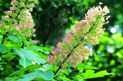 Top 10 Shrubs for Shade