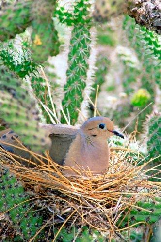 Do Birds Reuse Their Nests?