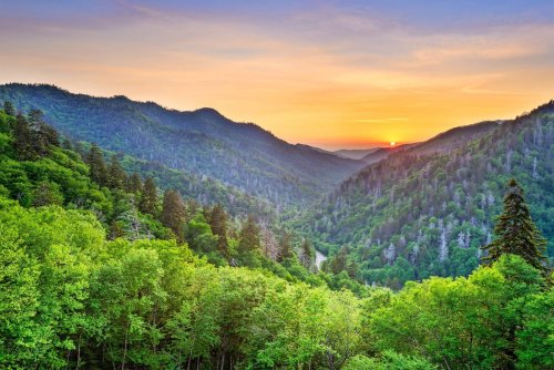 Visit Great Smoky Mountains to See Birds and Wildlife
