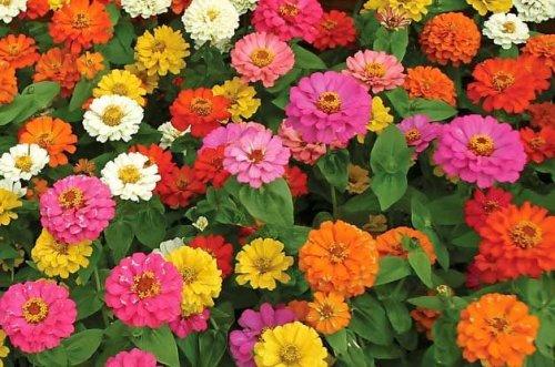 Top 10 Foolproof Plants for Kids