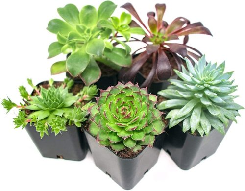10 Easy-to-Grow Houseplants All Plant Parents Need