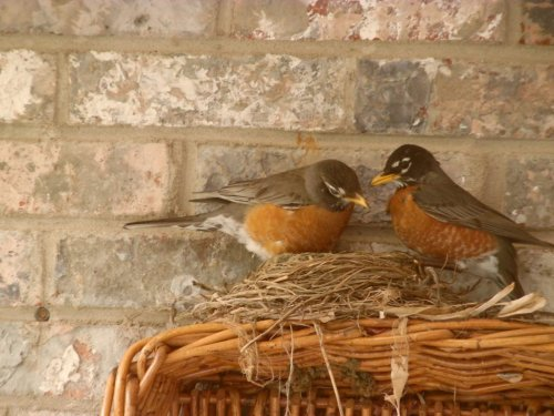 Get Ready for Baby Birds: Tips for Bird Nesting Season