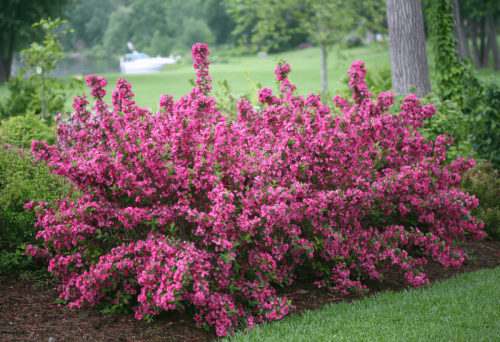 The Best Flowering Shrubs for Your Yard - cover