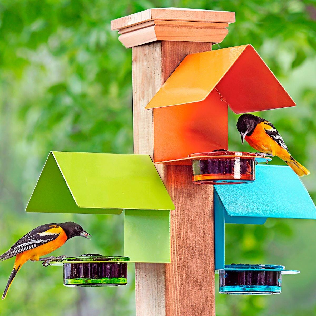 9 Unique Oriole Feeders Your Birds Will Love