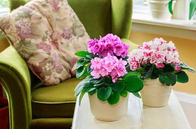 Top 10 Blooming Houseplants to Grow Indoors