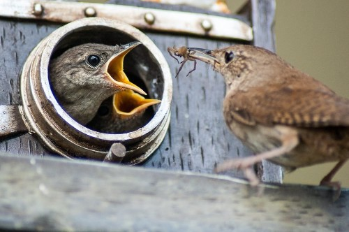 6 Proven Tips to Attract Nesting Birds