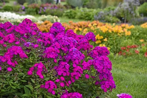 The Best New Garden Plants for 2021