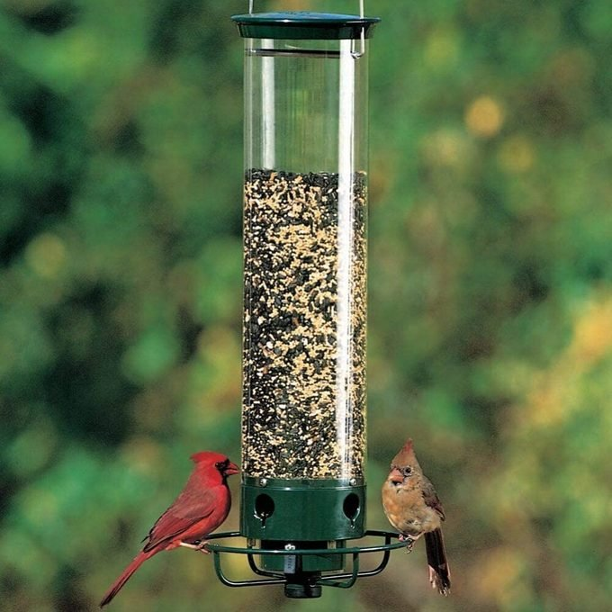 The Best Squirrel-Proof Bird Feeders and 12 Tips That Work