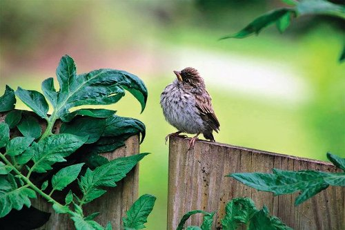 18 Pictures of Super Cute Baby Birds You Need to See