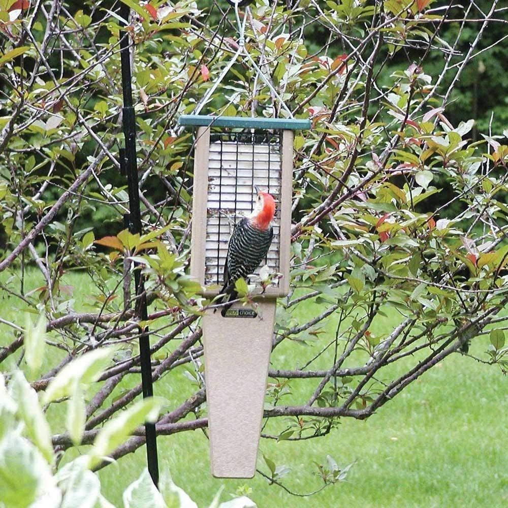 10 Types of Bird Feeders You Need in Your Backyard