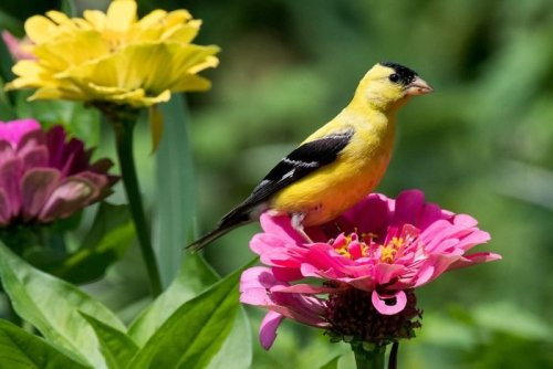 20 Super Pretty Pictures of Finches