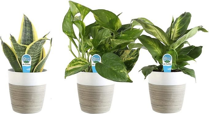 18 Indoor Plant Gifts to Brighten Your Day