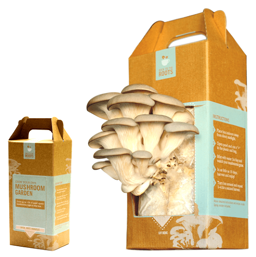 The 9 Best Mushroom Growing Kits and Logs