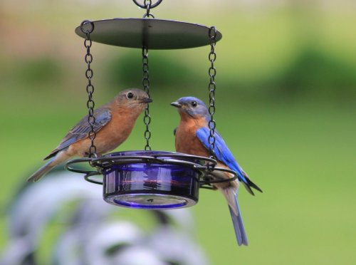 Your Guide to Feeding Mealworms to Birds