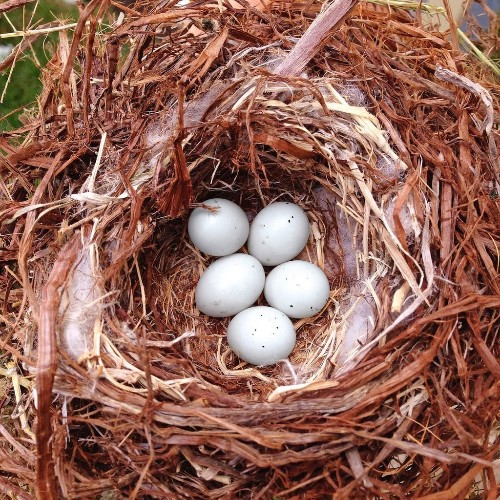 12 Extraordinary Bird Egg Facts