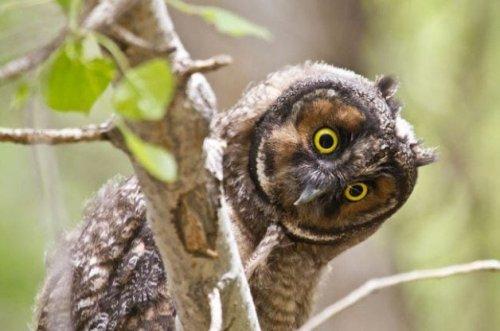 Expert Bird Photography Tips