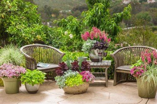 Gardeners Share Their BEST Container Garden Ideas