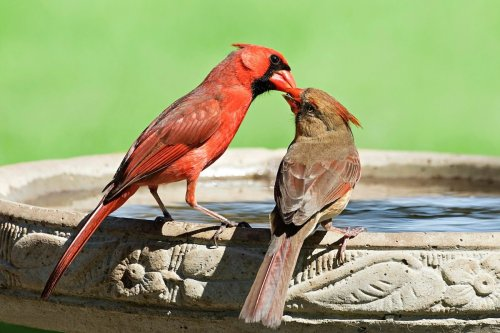 How to Clean a Birdbath
