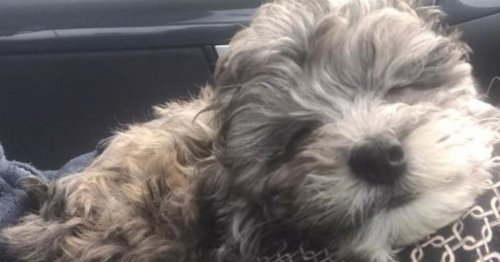 Meet West Midlands Police's cute new recruit for 'wellbeing' role