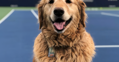 Tennis Canada raises over $10k for dog injured in forklift accident at Toronto stadium