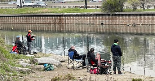 People are now fishing just steps from a King St. streetcar stop in Toronto