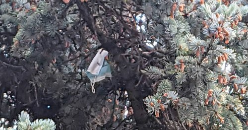 Birds use disposable face mask to build nest high up in Mississauga tree